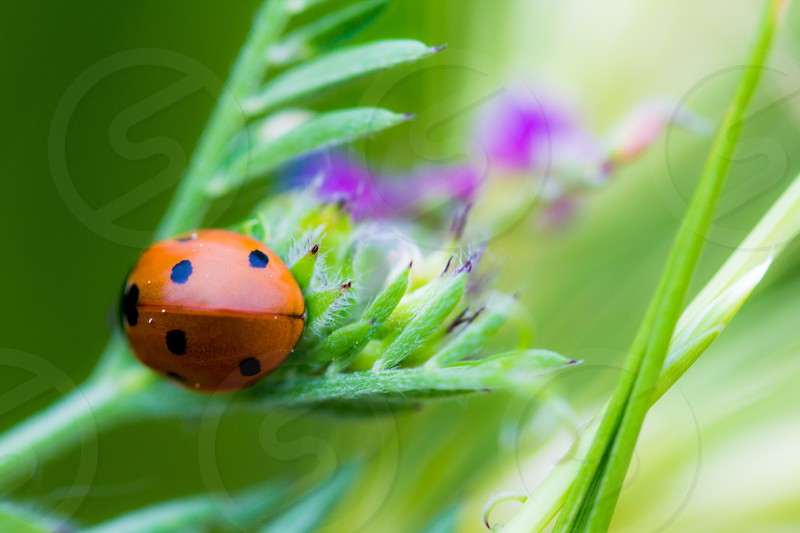 Beauty ladybug macro nature photo