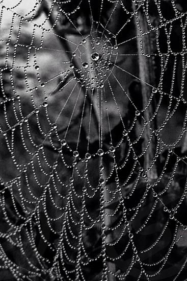 Spiderwebwaterdropsdroplets photo