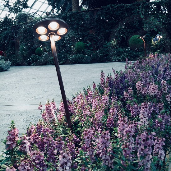 Light violet flowers landscape garden photo