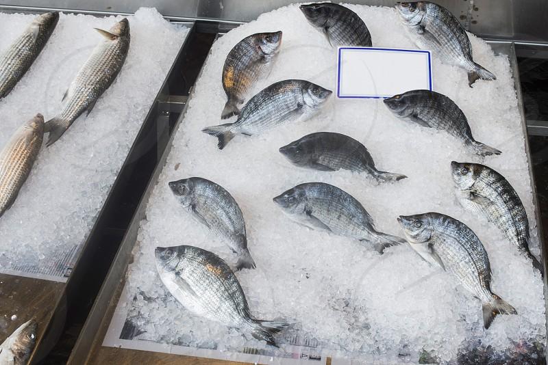 Fish on ice in the market. Greece Athens Piraeus photo