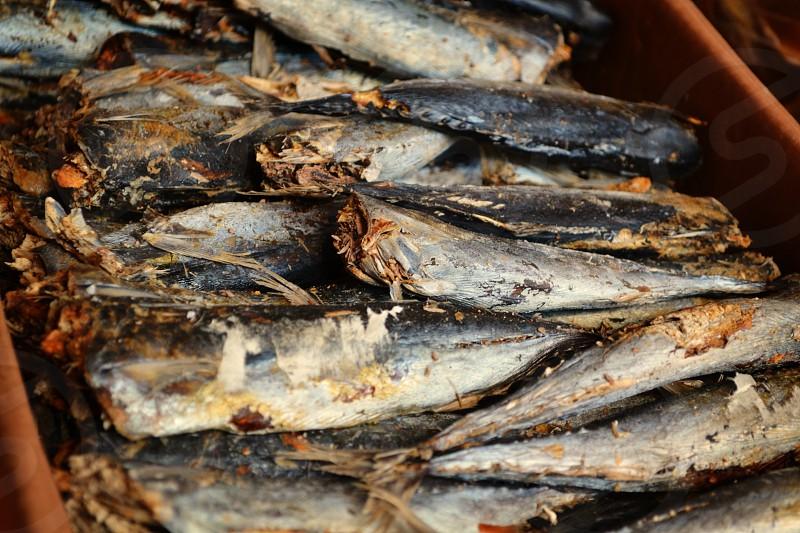 Dried fish Sa Pa Vietnam photo