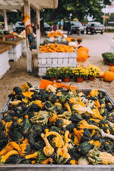 Fall pumpkins orange farmers market. Guards  photo