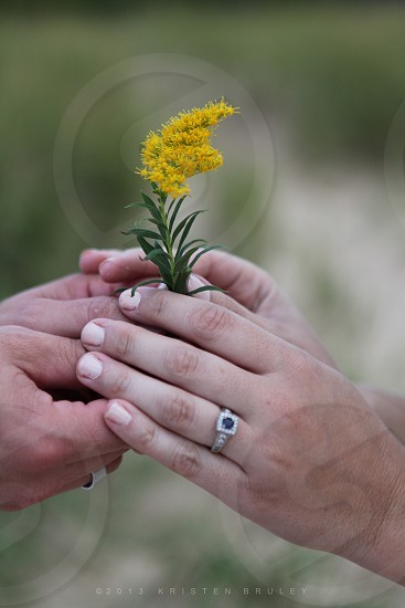 Flower hands love photo