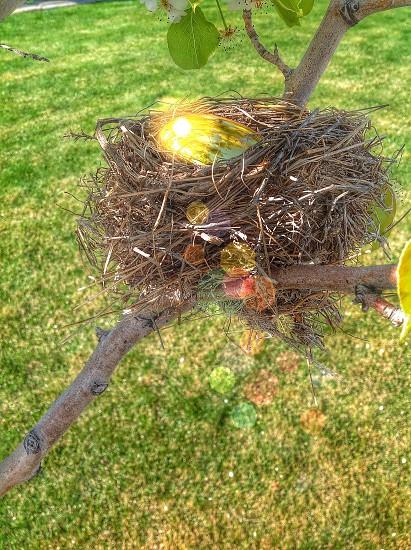brown bird nest on tree branch photo