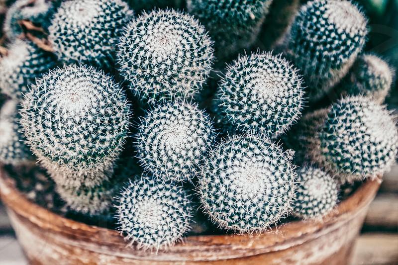 Circles Cactus  shapes plants succulent  top view photo