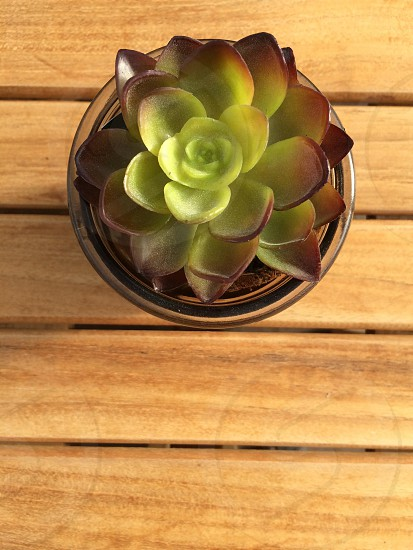 Succulent wood table photo