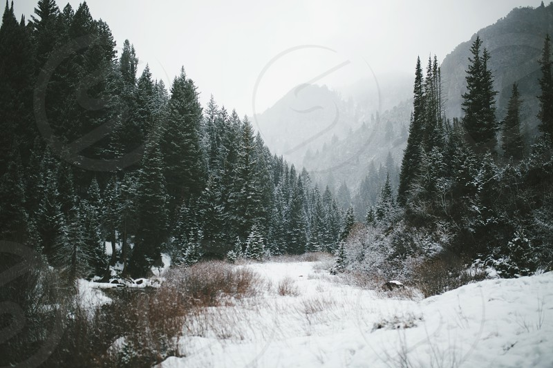Winter land photo