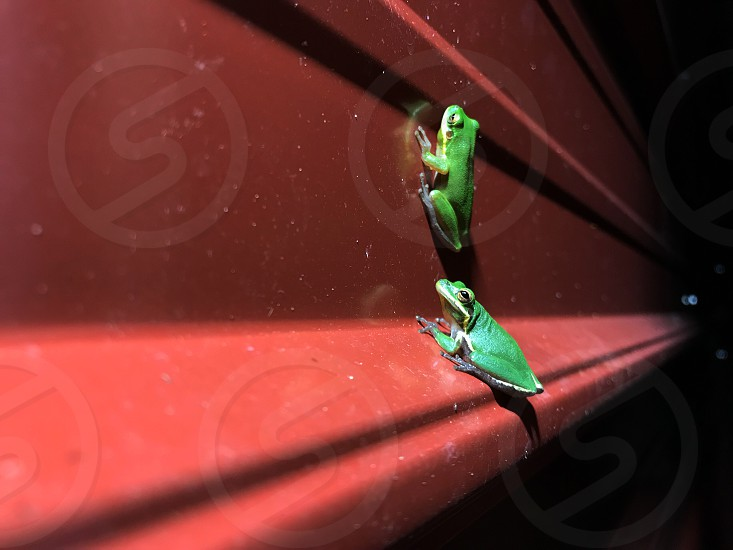 Green green frog frog corrugated metal red photo