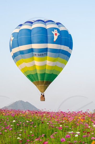 Hot air balloon over colourful cosmos flower photo
