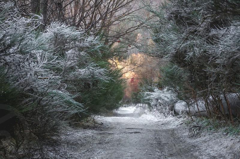 Frozen winter land photo