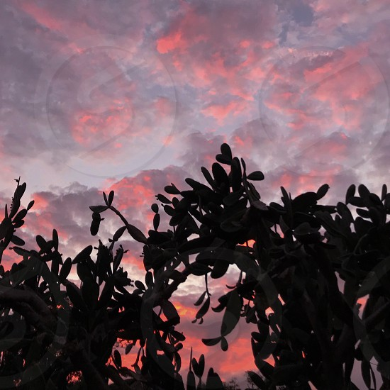 Coral sunset sunset cactus silhouette  photo
