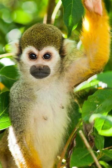 Cheeky Monkey photo