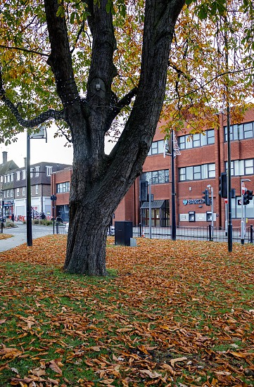 CRAWLEY WEST SUSSEX/UK - NOVEMBER 21 : Autumn leaves under a Horse Chestnut tree in Crawley West Sussex on November 21 2018. Two unidentified people photo
