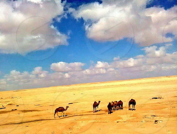 Desert's magic photo