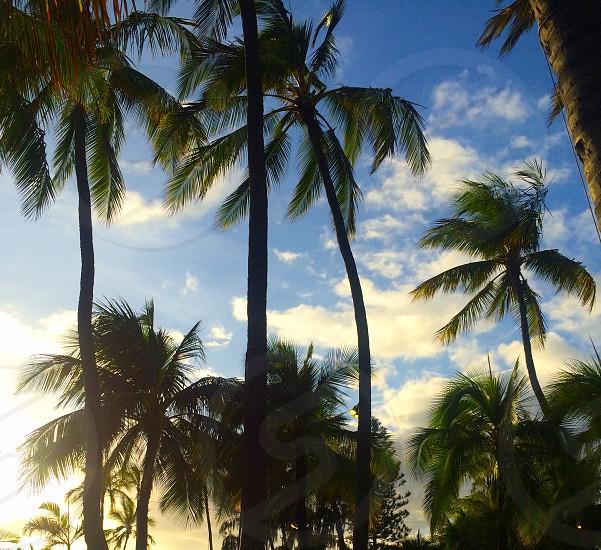A beach in Hawaii. photo