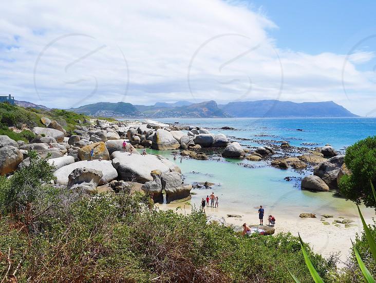 Boulders beach Cape Town penguins  photo