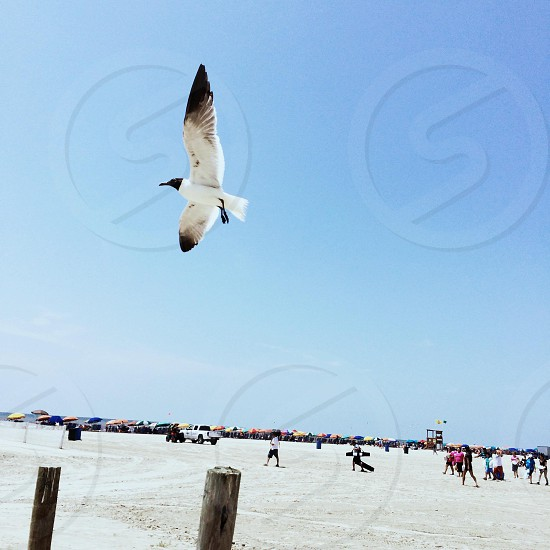 black and white bird flying photo