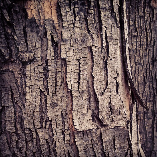 Bark. photo