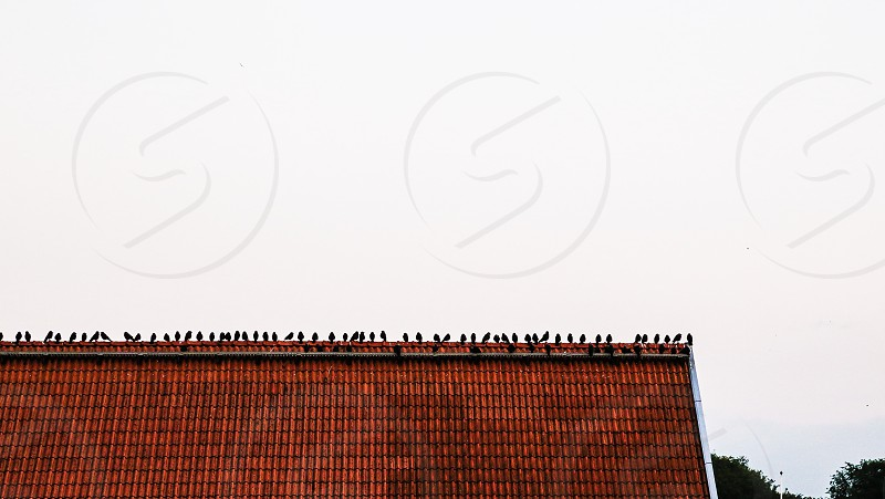 Birds blackbirds roof building web space spacious contrast contrasts multiple animals abstract funny humor simplicity simple city community communication row nature cityview  photo