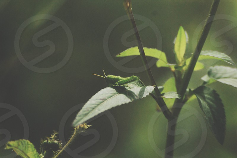 Nature cricket insects animals flower plant photo
