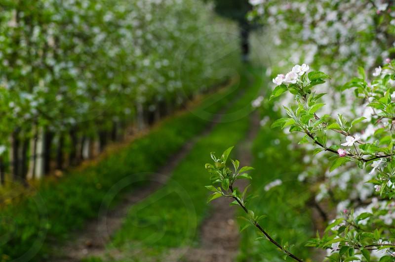 flower garden pathway photo