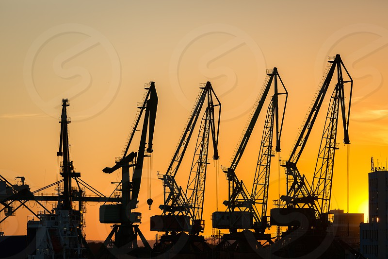 Big cranes silhouette in the port at sunset  photo