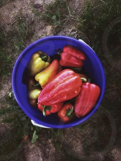 Autumnvegetablesfruitsbacketvillagegarden photo