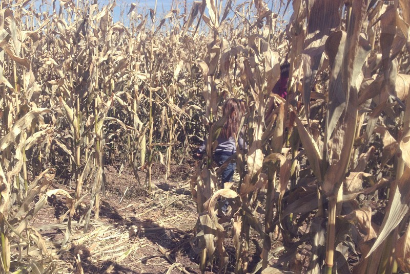 Corn Field — Parker CO photo