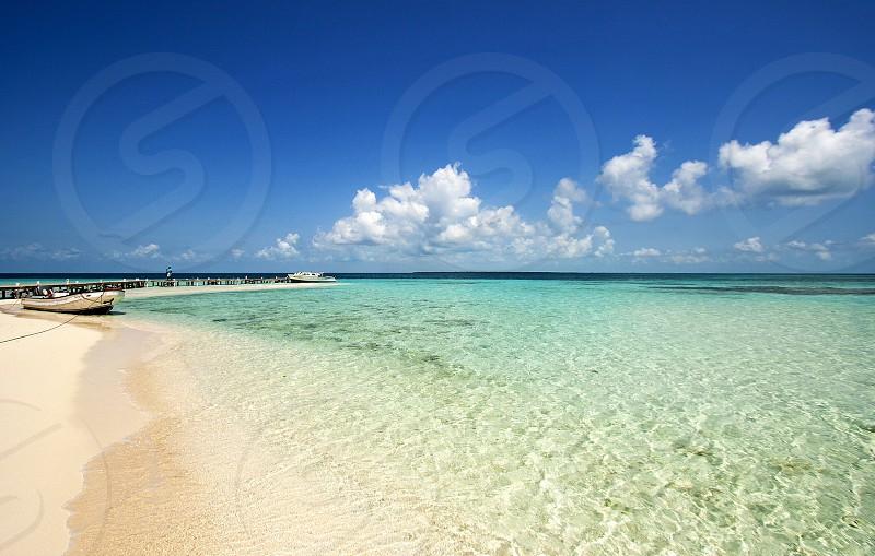 Teal. Summer. Goffs Caye Belize.  photo