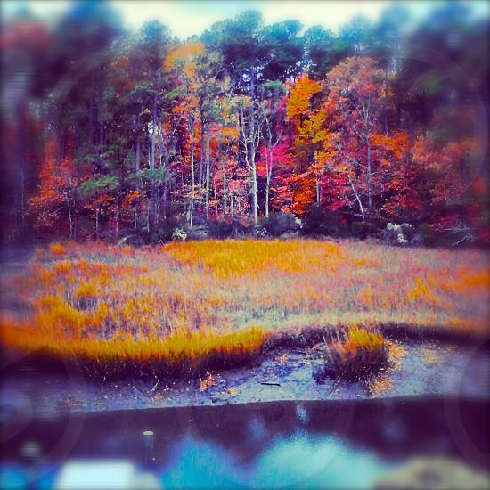 Fall 2013 in VA BEACH VA  photo
