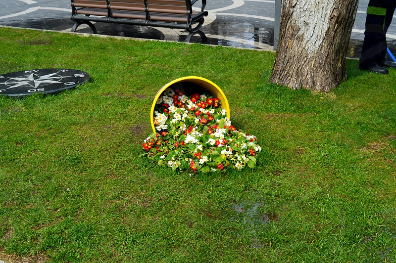 Unique bucket - flowers in the city Park. photo