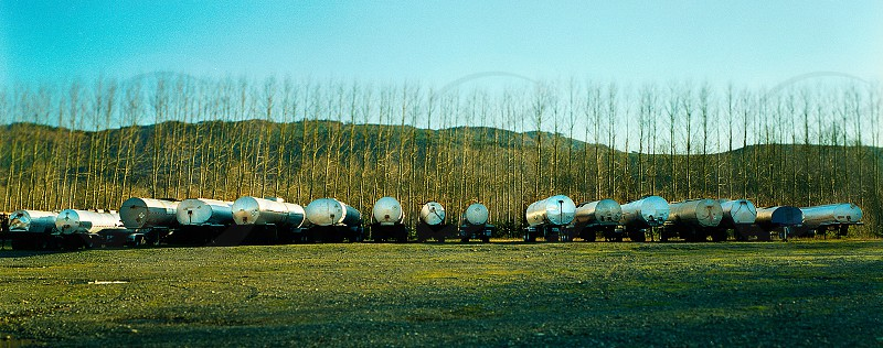 Tanker trailers parked in front of poplars.