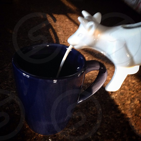 white cow shaped milk pot with milk being poured in blue ceramic mug photo