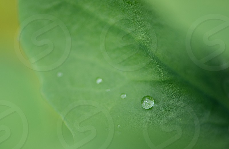 Close up of a water drop on a leaf. photo