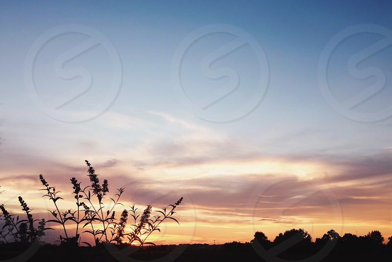 Summer evening.  photo