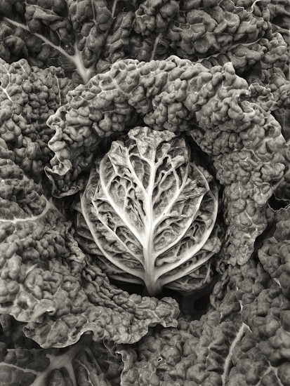 grayscale photo of vegetable photo