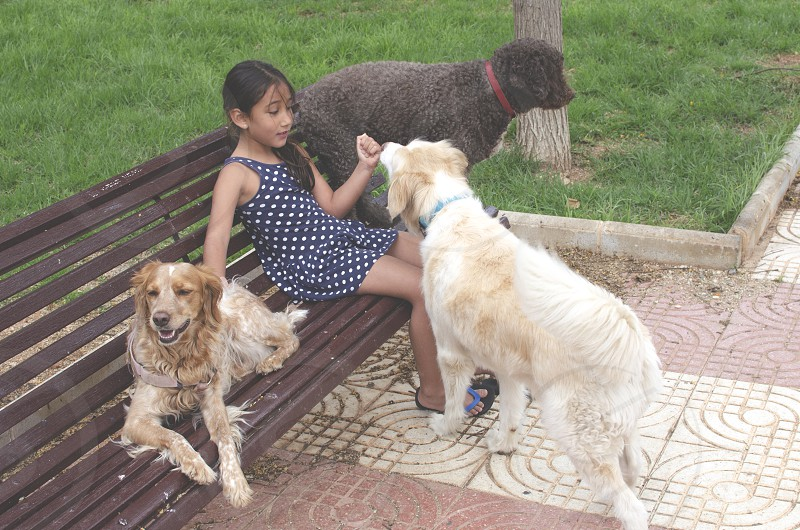 An infant girl sitting on a bench in a park and is accompanied by her three dogs photo