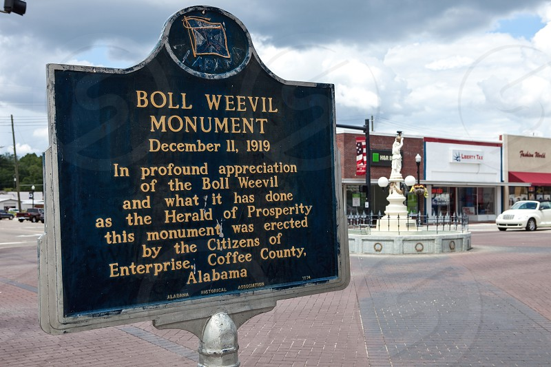 hometown Enterprise boll weevil photo