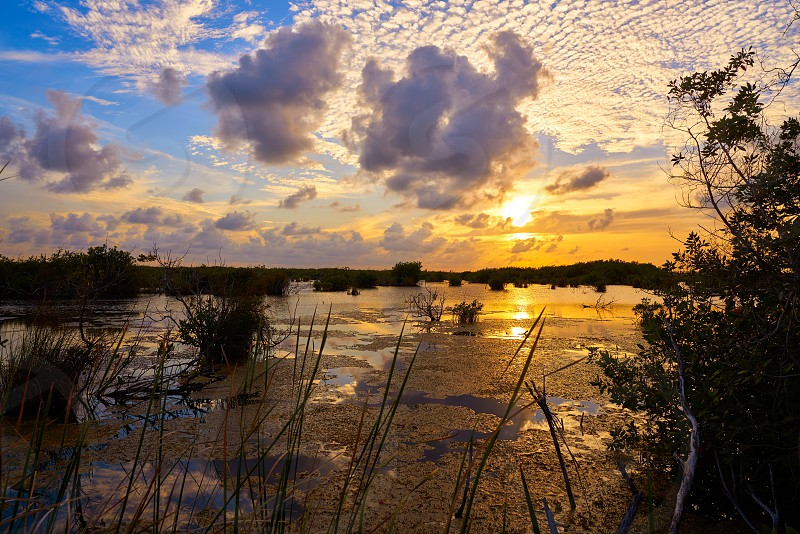 Mangroove sunset in Riviera Maya lagoon of Mexico photo