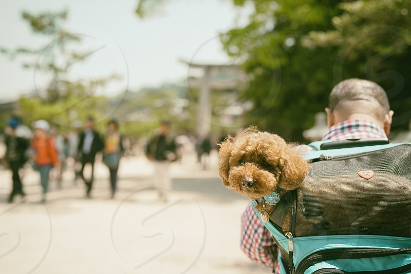 man in blue and red checkered long sleeve shirt carrying teal and black backpack with brown short coated medium size dog inside during daytime photo