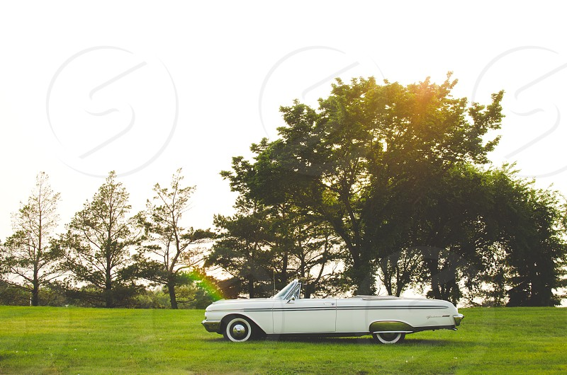Classic white convertible car on grassy lawn with trees and sunlight in the background. photo