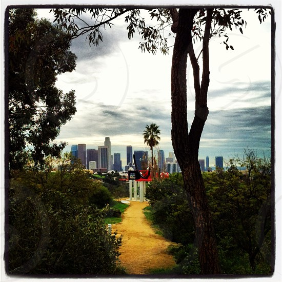 Downtown Los Angeles from Elysian Park. photo