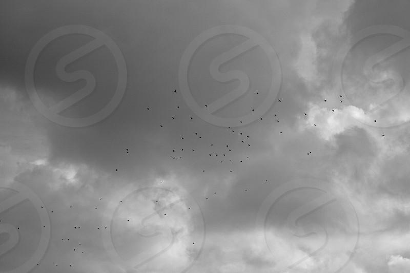 "an extracted imitation of Jan van Jinken's beautiful film ""The Art of Flying"". photo"