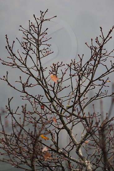Rainy winter day photo