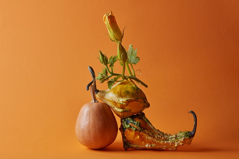 Autumn pumpkins. Composition of various pumpkins on an orange background photo