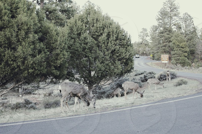 deers by the road photo
