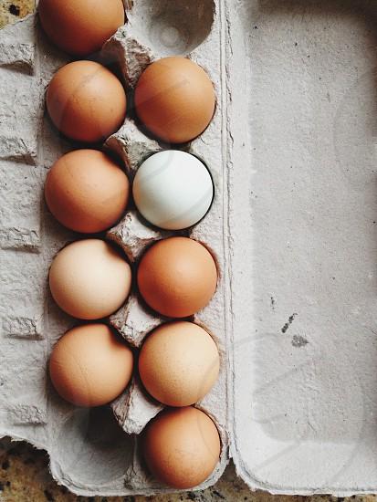eggs on carton photo