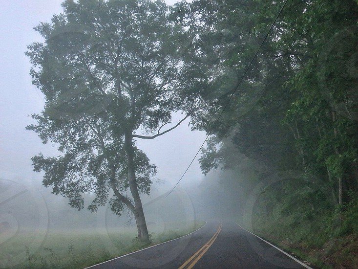 Foggy morning photo