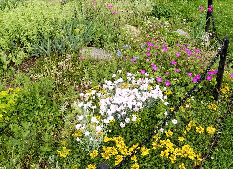 Wildflower Garden  photo