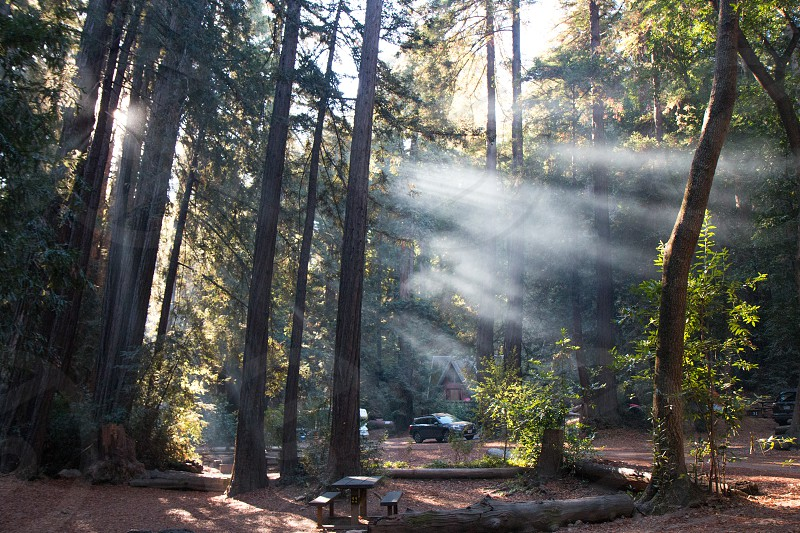 Sunrise with clearly visible sunbeams at a campsite near Big Sur in California USA photo